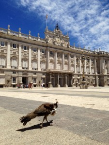 Pavo Royal at the palace