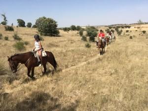 trainhorses